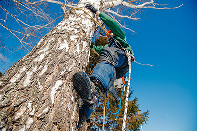 Platinum Tree Service of Michigan climbing large tree