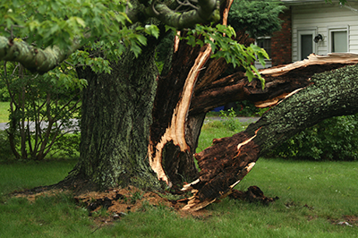 Tree Damage from recent storms in middle and northern lower Michigan