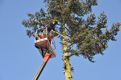 Platinum Tree Service, LLC Howard City Michigan